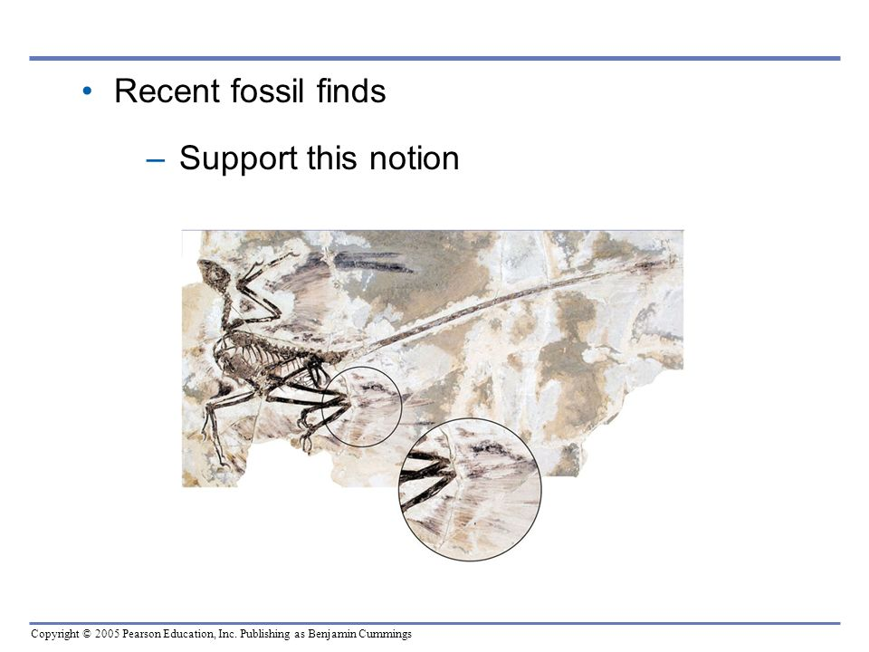 Recent fossil finds Support this notion