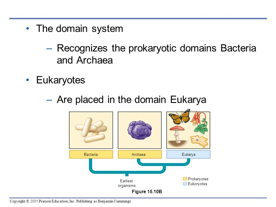 Recognizes the prokaryotic domains Bacteria and Archaea