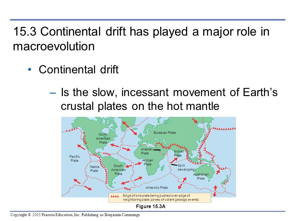 15.3 Continental drift has played a major role in macroevolution