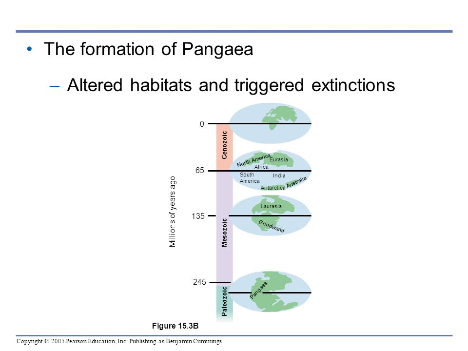 The formation of Pangaea Altered habitats and triggered extinctions
