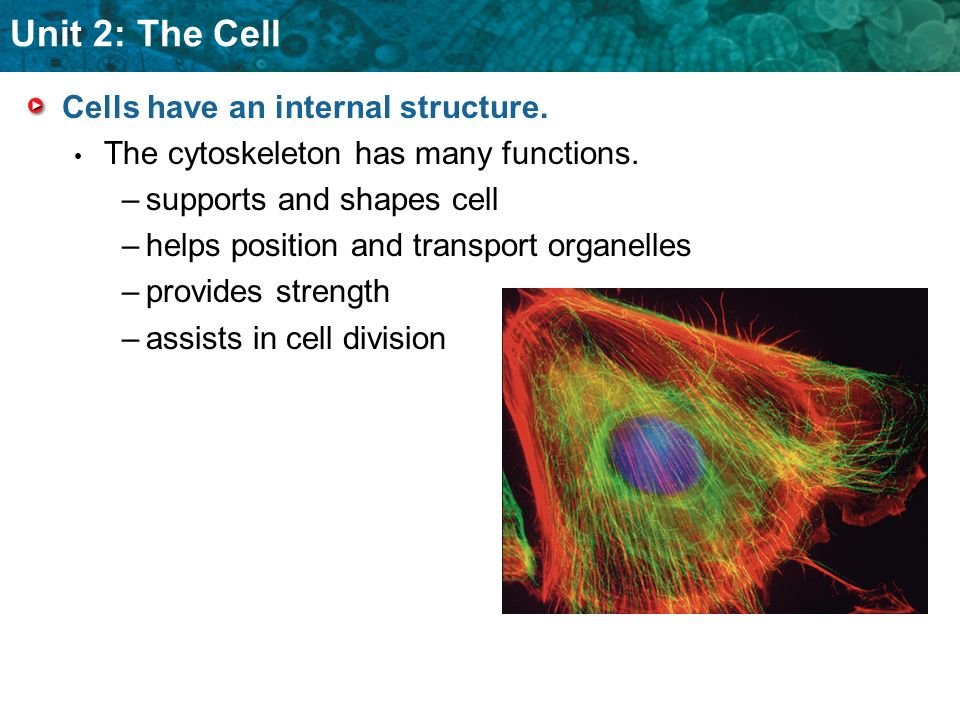Cells have an internal structure.