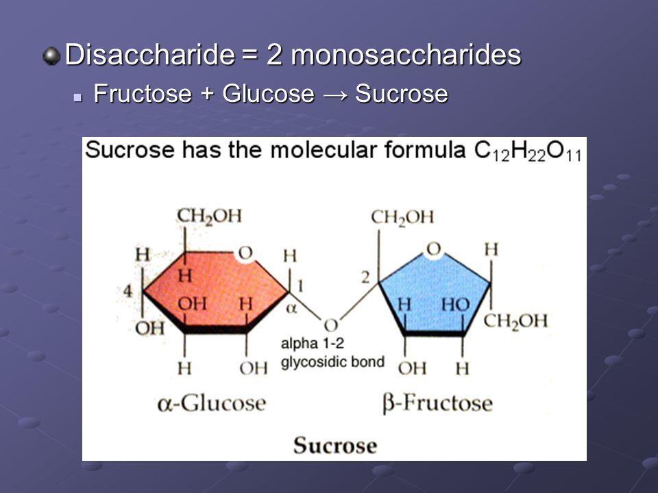 Disaccharide = 2 monosaccharides