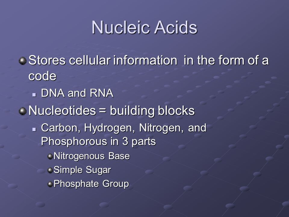 Nucleic Acids Stores cellular information in the form of a code