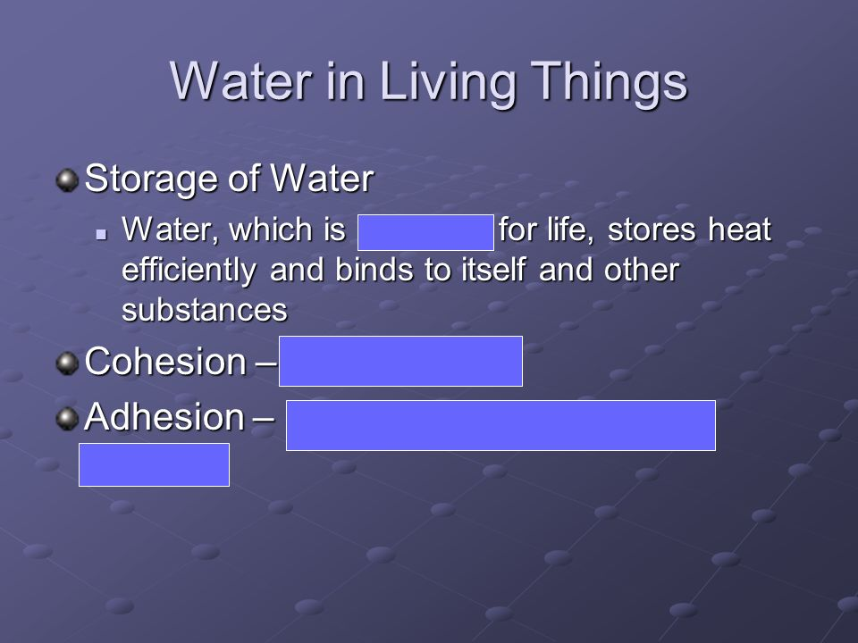 Water in Living Things Storage of Water Cohesion – sticks to itself