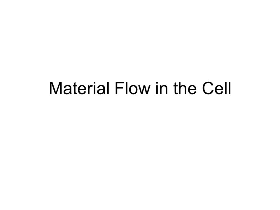 Material Flow in the Cell