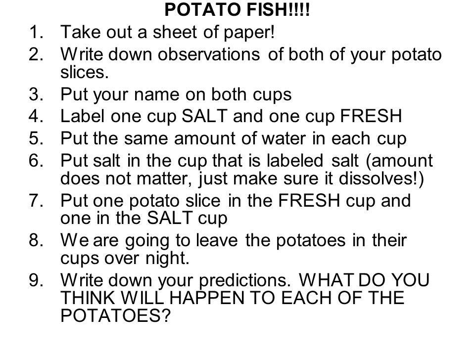POTATO FISH!!!! Take out a sheet of paper! Write down observations of both of your potato slices. Put your name on both cups.