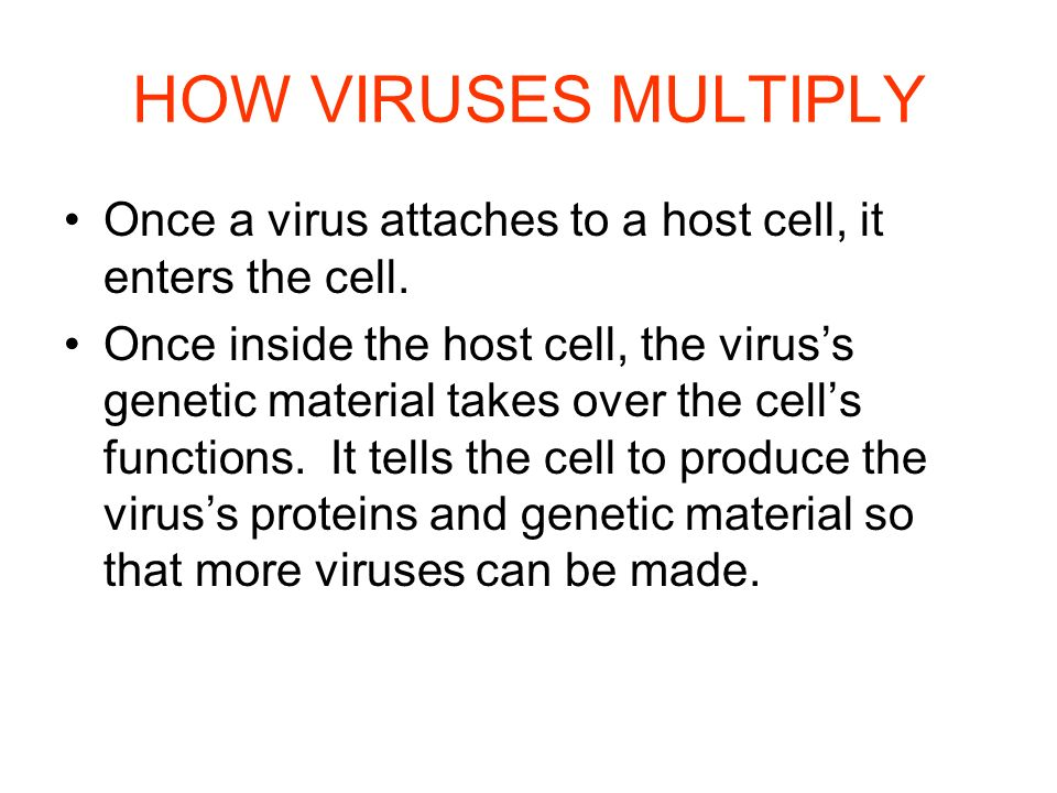 HOW VIRUSES MULTIPLY Once a virus attaches to a host cell, it enters the cell.