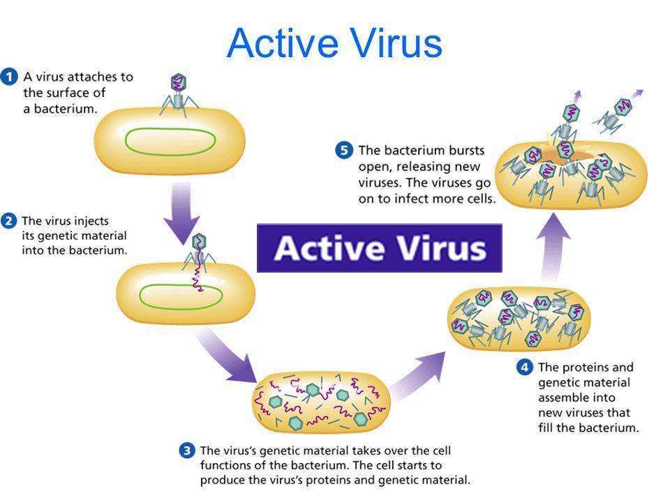 Active Virus