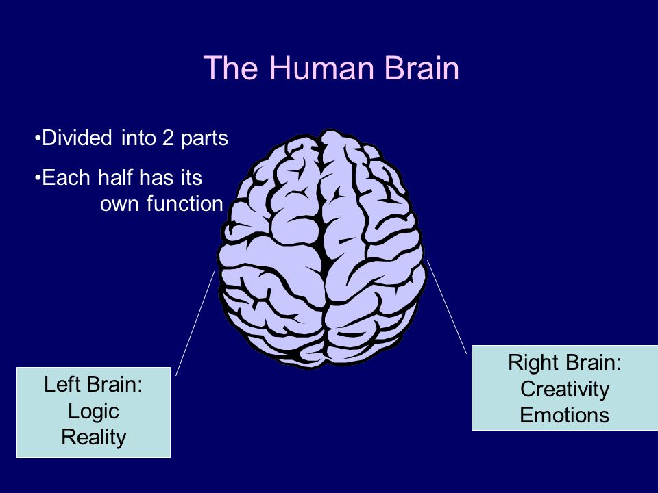 The Human Brain Divided into 2 parts Each half has its own function
