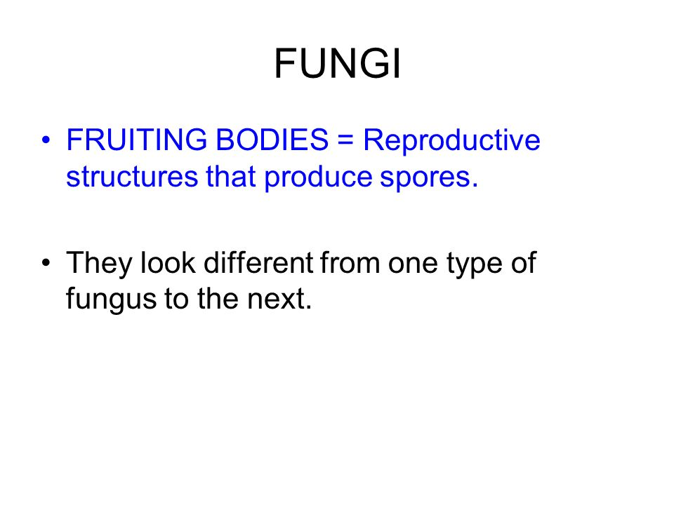 FUNGI FRUITING BODIES = Reproductive structures that produce spores.