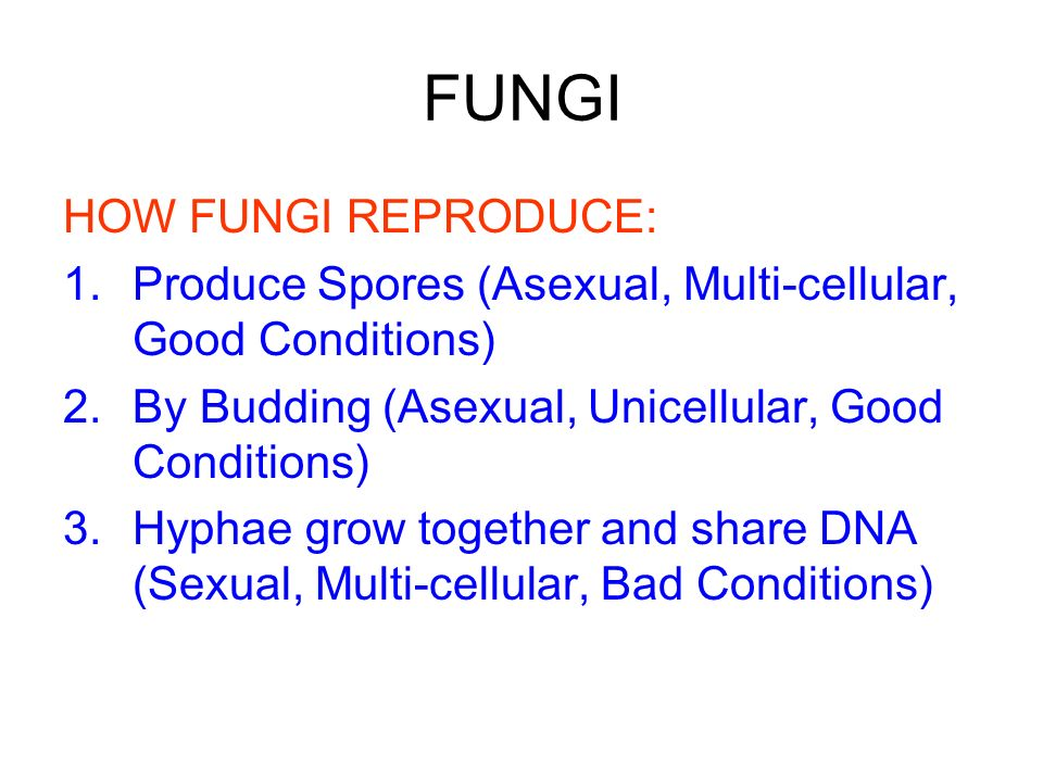 FUNGI HOW FUNGI REPRODUCE: