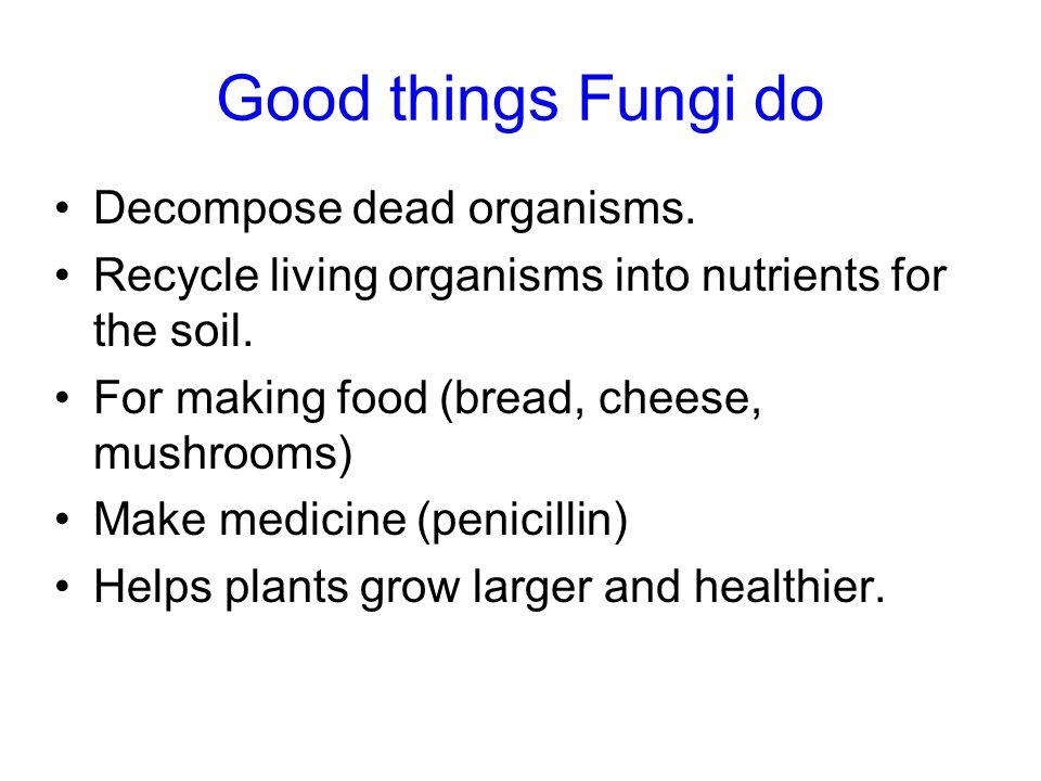 Good things Fungi do Decompose dead organisms.