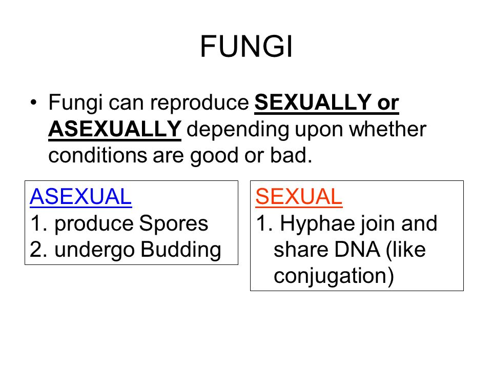 FUNGI Fungi can reproduce SEXUALLY or ASEXUALLY depending upon whether conditions are good or bad. ASEXUAL.