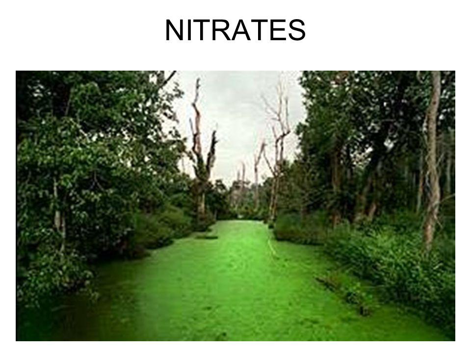 NITRATES