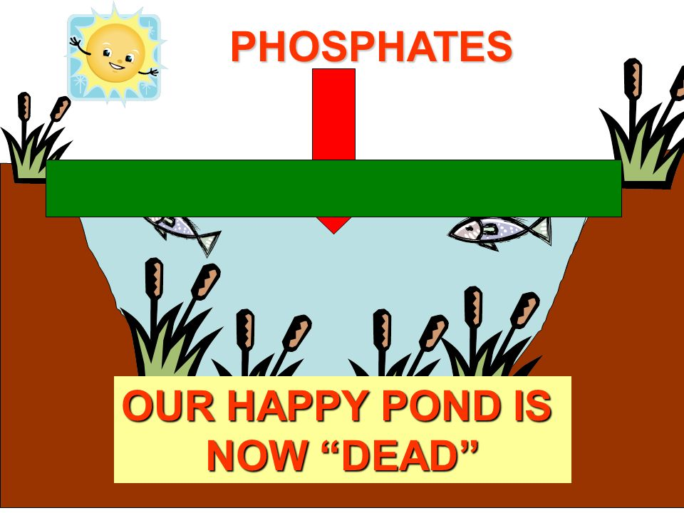 PHOSPHATES OUR HAPPY POND IS NOW DEAD
