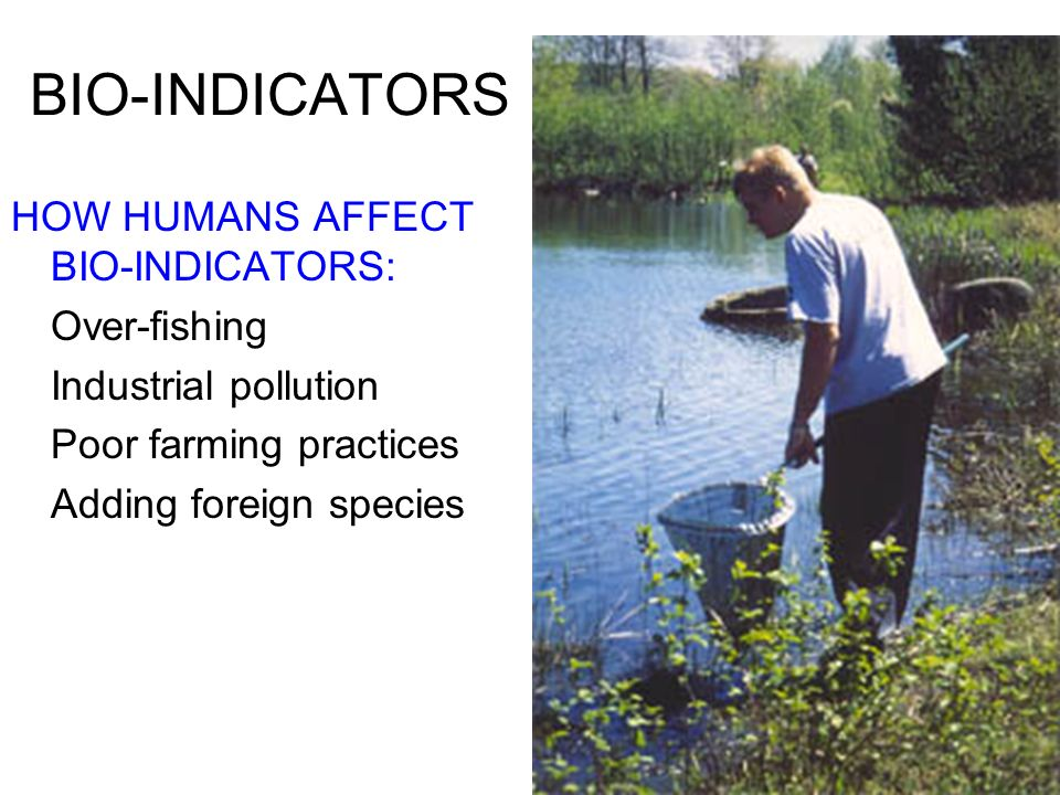 BIO-INDICATORS HOW HUMANS AFFECT BIO-INDICATORS: Over-fishing