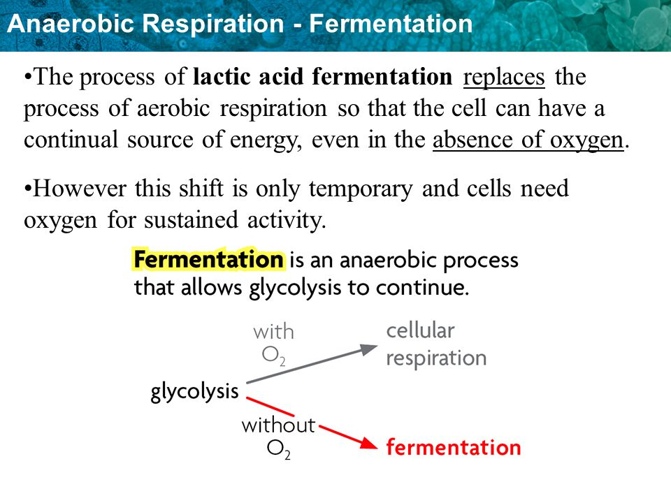 The process of lactic acid fermentation replaces the process of aerobic respiration so that the cell can have a continual source of energy, even in the absence of oxygen.