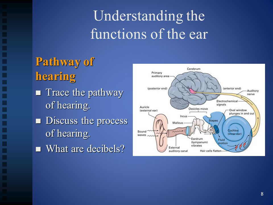 Understanding the functions of the ear