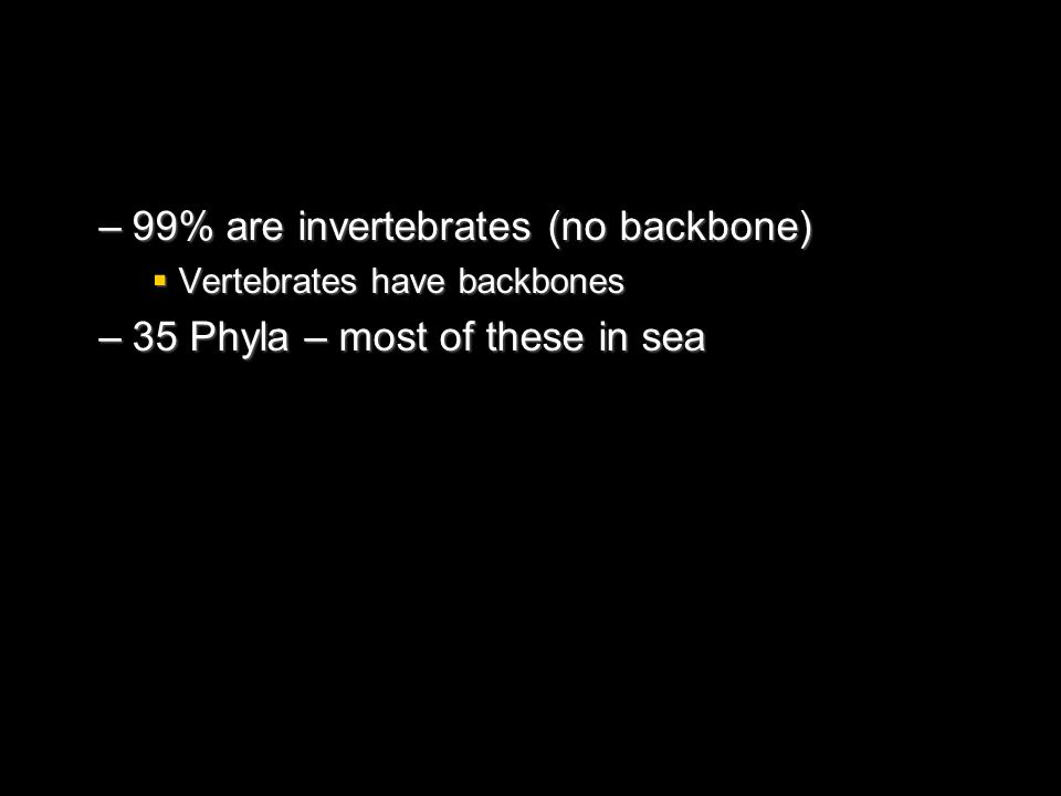 99% are invertebrates (no backbone) 35 Phyla – most of these in sea