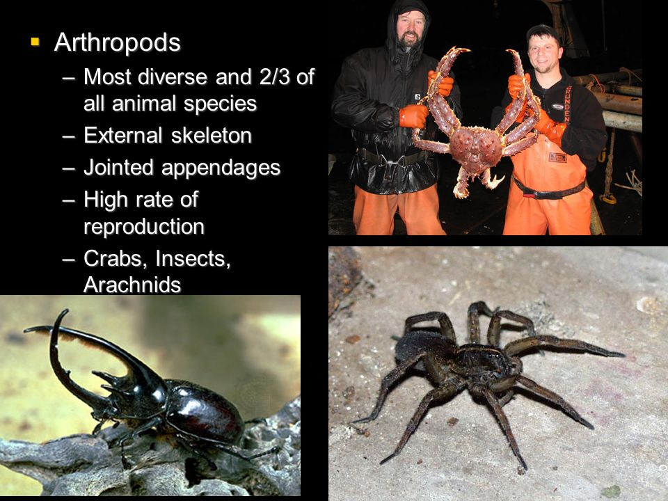 Arthropods Most diverse and 2/3 of all animal species