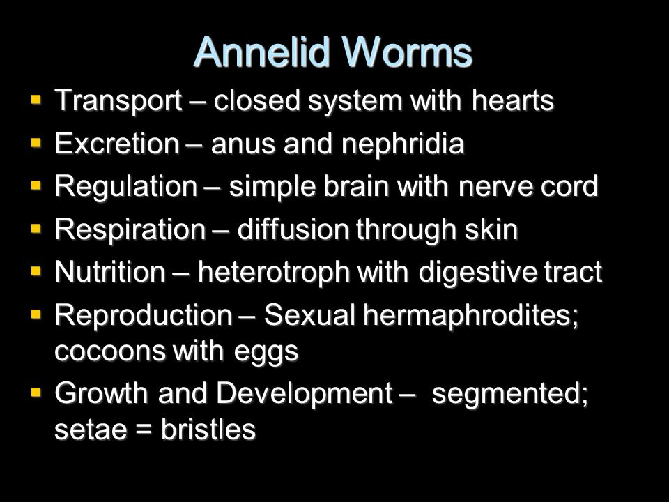 Annelid Worms Transport – closed system with hearts