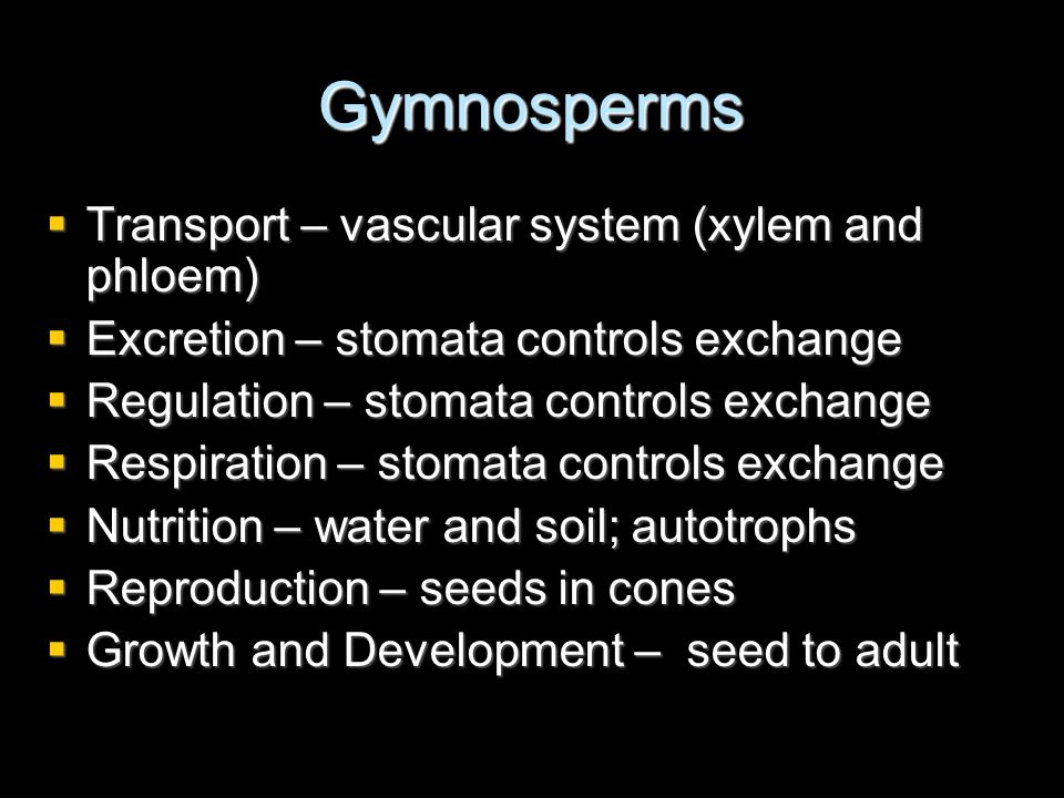 Gymnosperms Transport – vascular system (xylem and phloem)