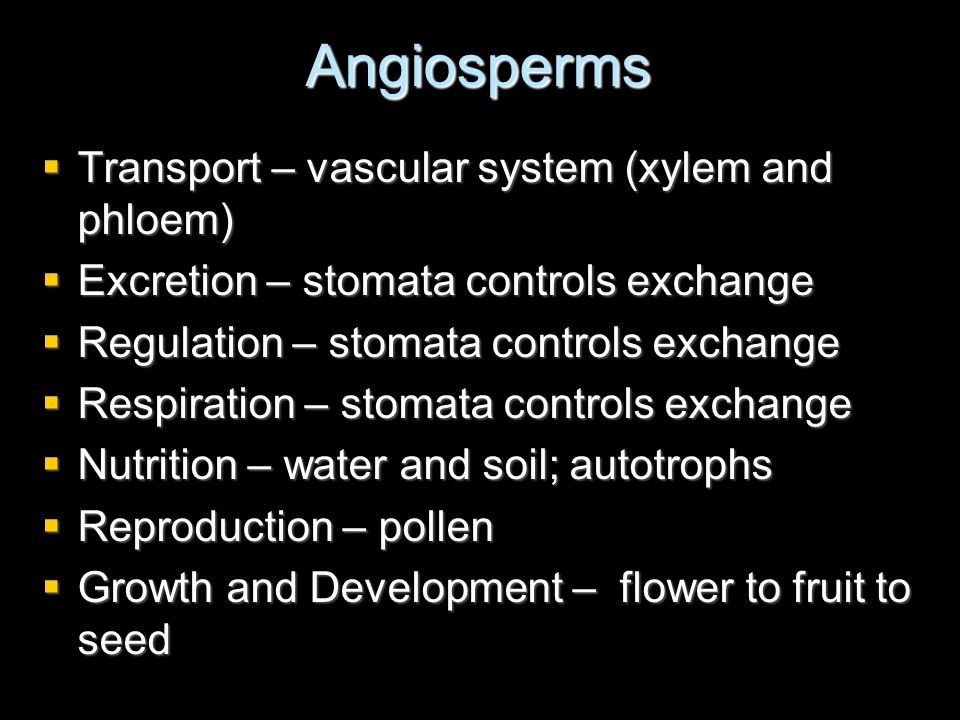 Angiosperms Transport – vascular system (xylem and phloem)
