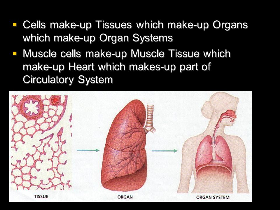 Cells make-up Tissues which make-up Organs which make-up Organ Systems