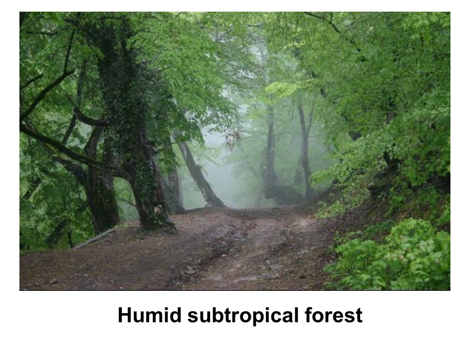 Humid subtropical forest
