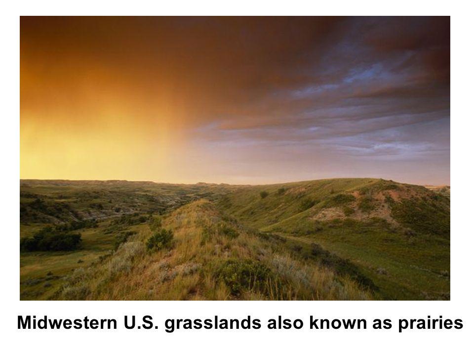 Midwestern U.S. grasslands also known as prairies