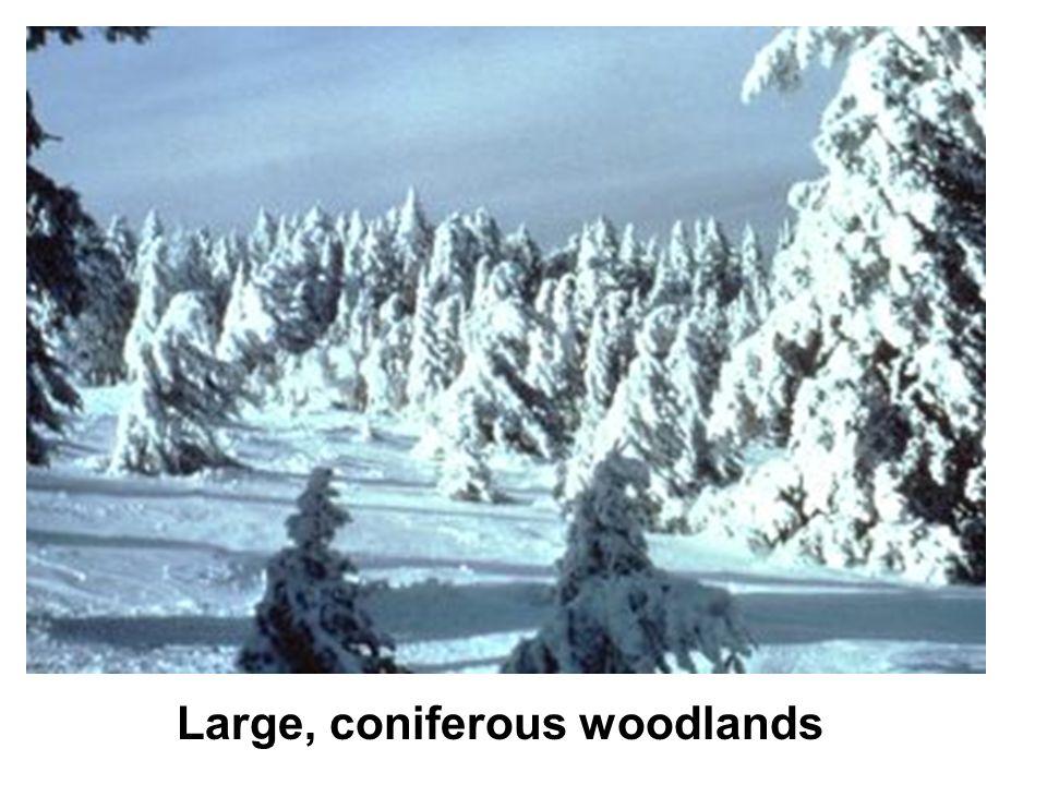 Large, coniferous woodlands