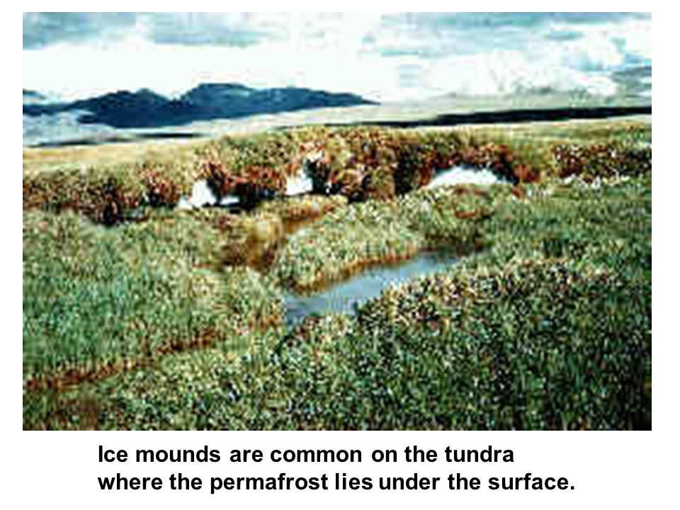 Ice mounds are common on the tundra