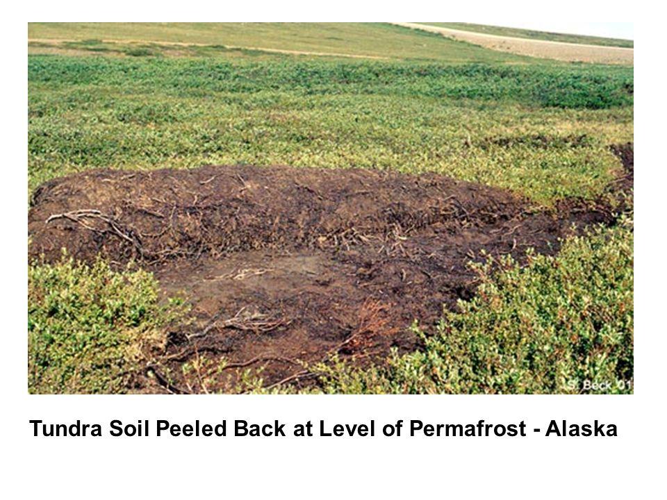 Tundra Soil Peeled Back at Level of Permafrost - Alaska