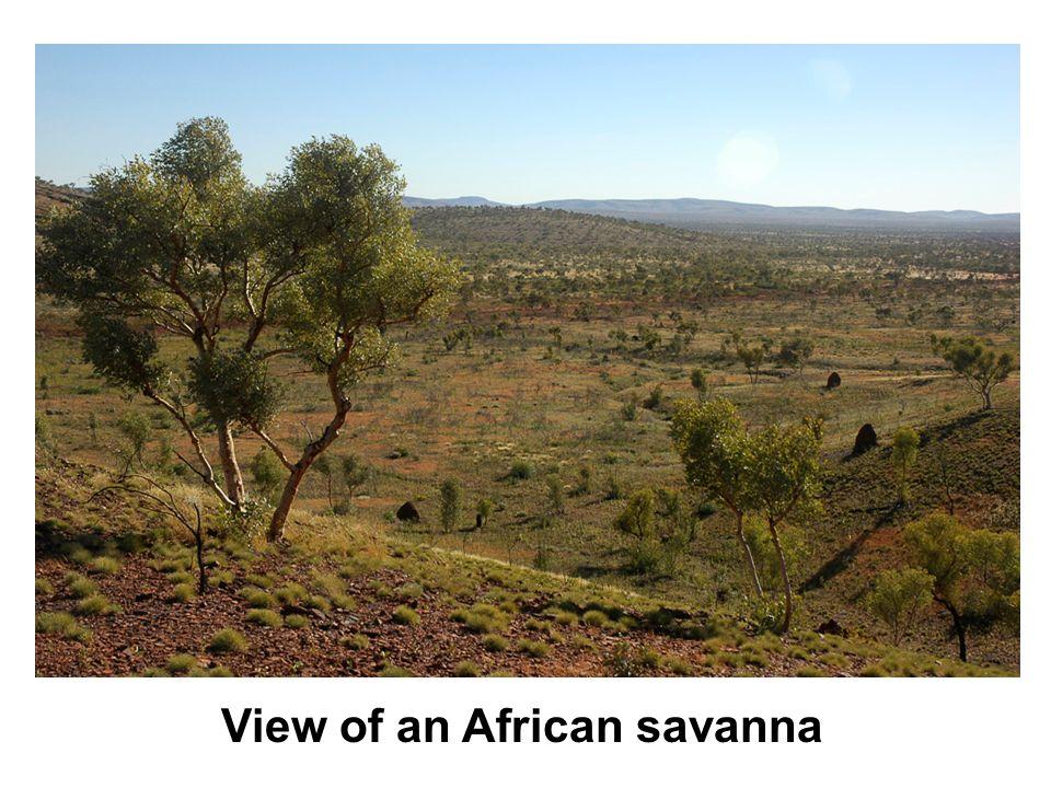 View of an African savanna