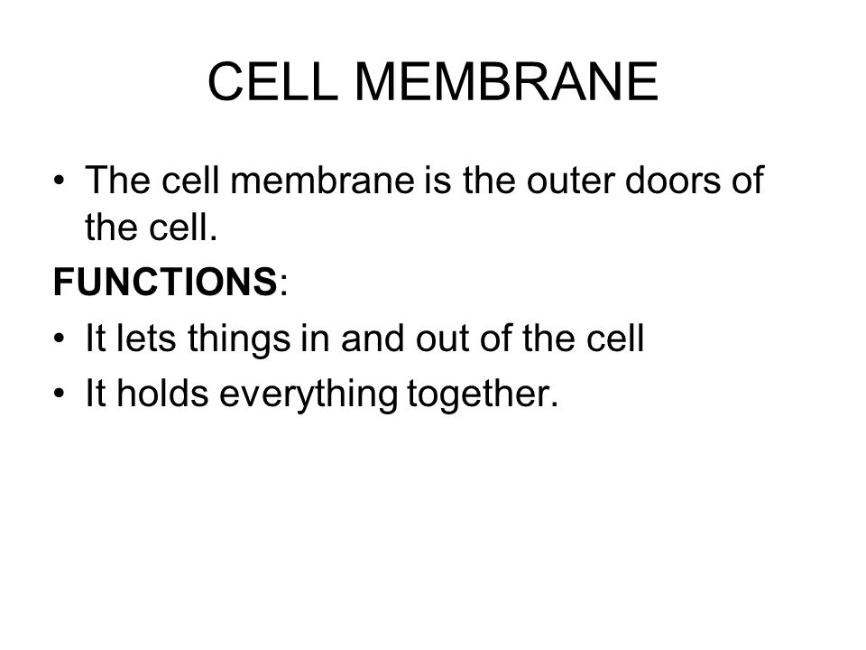 CELL MEMBRANE The cell membrane is the outer doors of the cell.