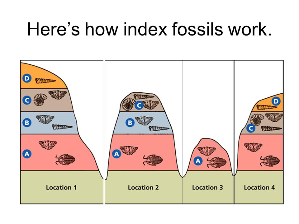 Here's how index fossils work.