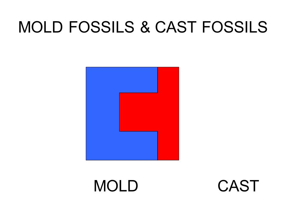 MOLD FOSSILS & CAST FOSSILS