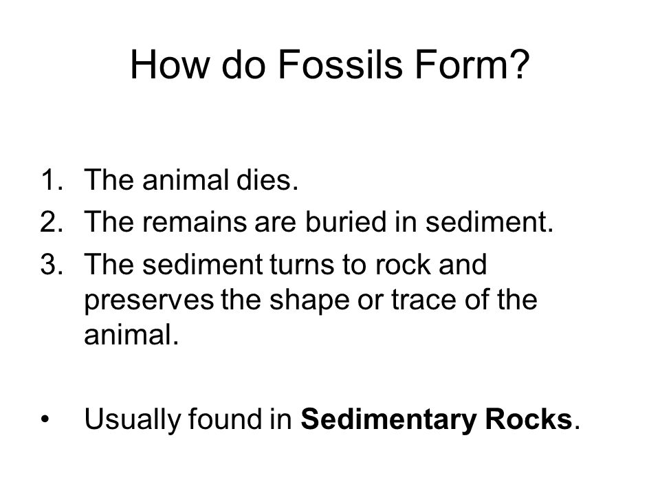How do Fossils Form The animal dies.
