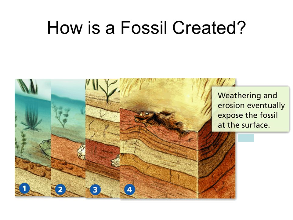 How is a Fossil Created