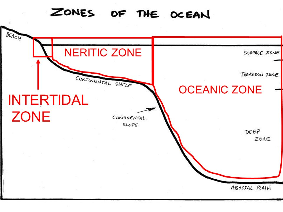 OCEANIC ZONE INTERTIDAL ZONE NERITIC ZONE