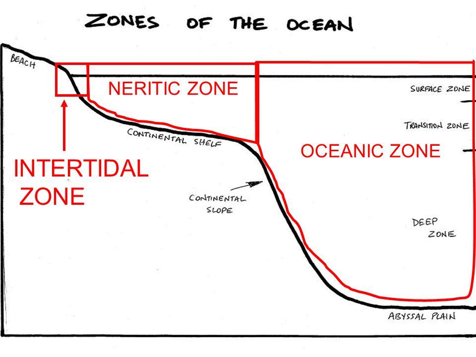 OCEANIC ZONE INTERTIDAL ZONE NERITIC ZONE