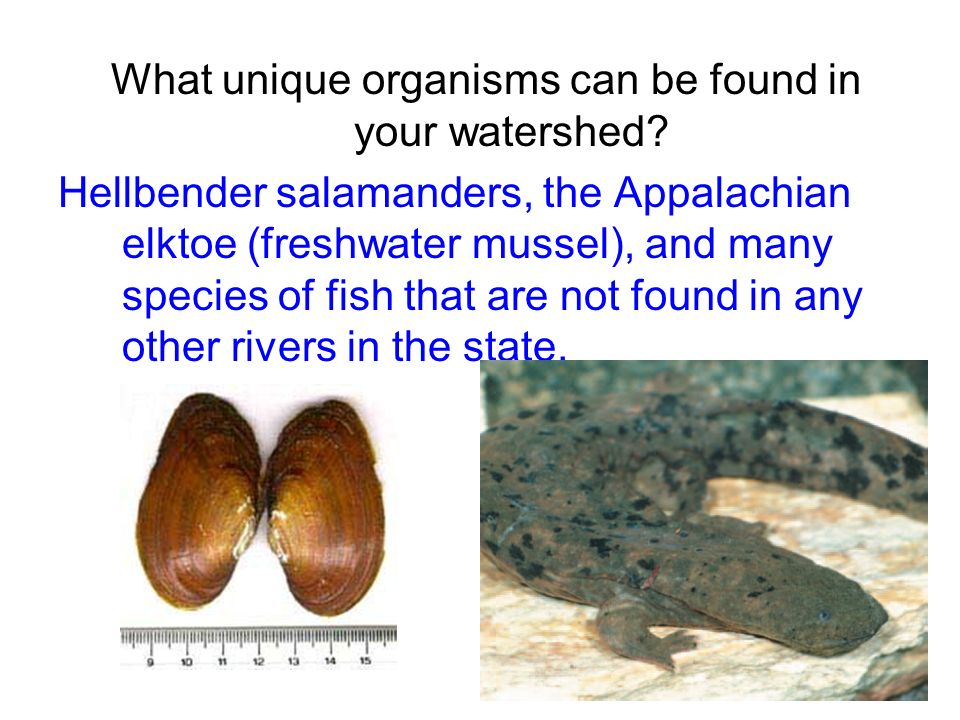 What unique organisms can be found in your watershed