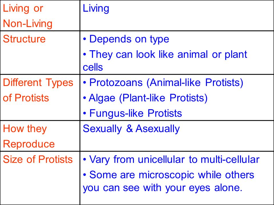 Living or Non-Living. Living. Structure. Depends on type. They can look like animal or plant cells.