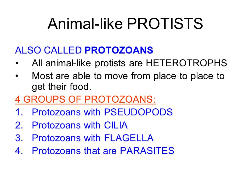 Animal-like PROTISTS ALSO CALLED PROTOZOANS