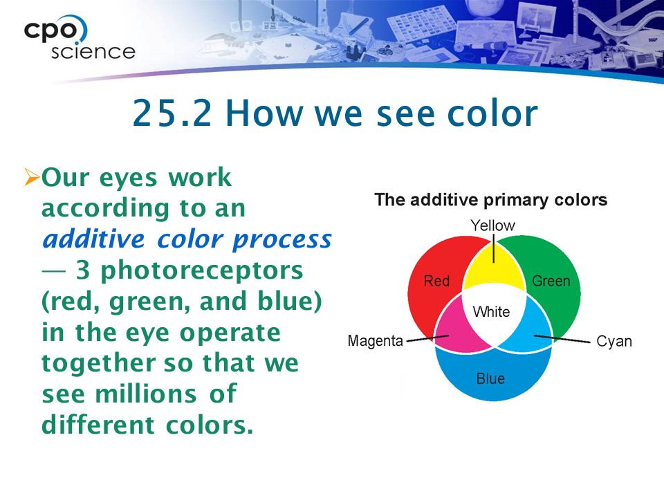25 2 The Human Eye The Eye Is The Sensory Organ Used For