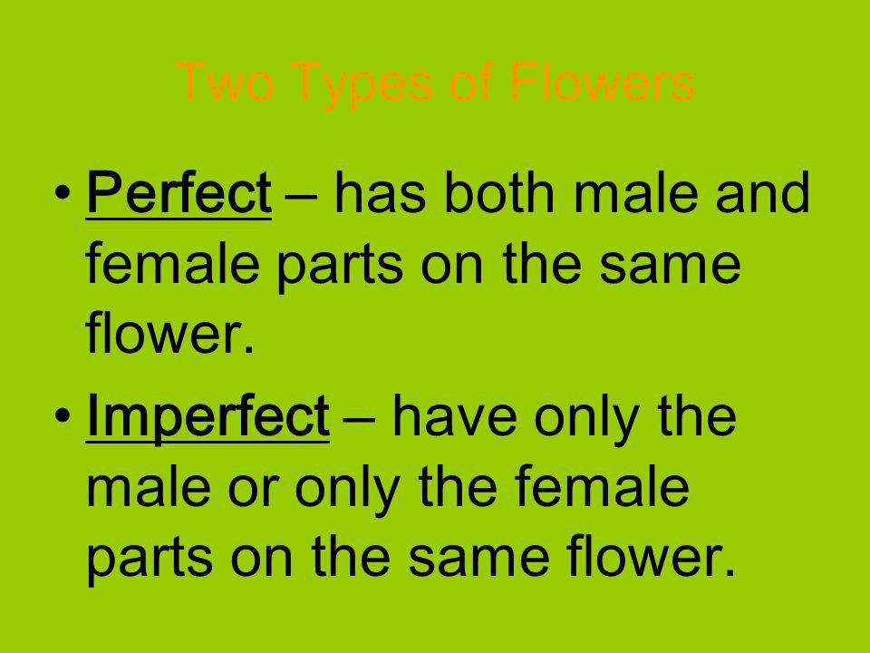 Perfect – has both male and female parts on the same flower.