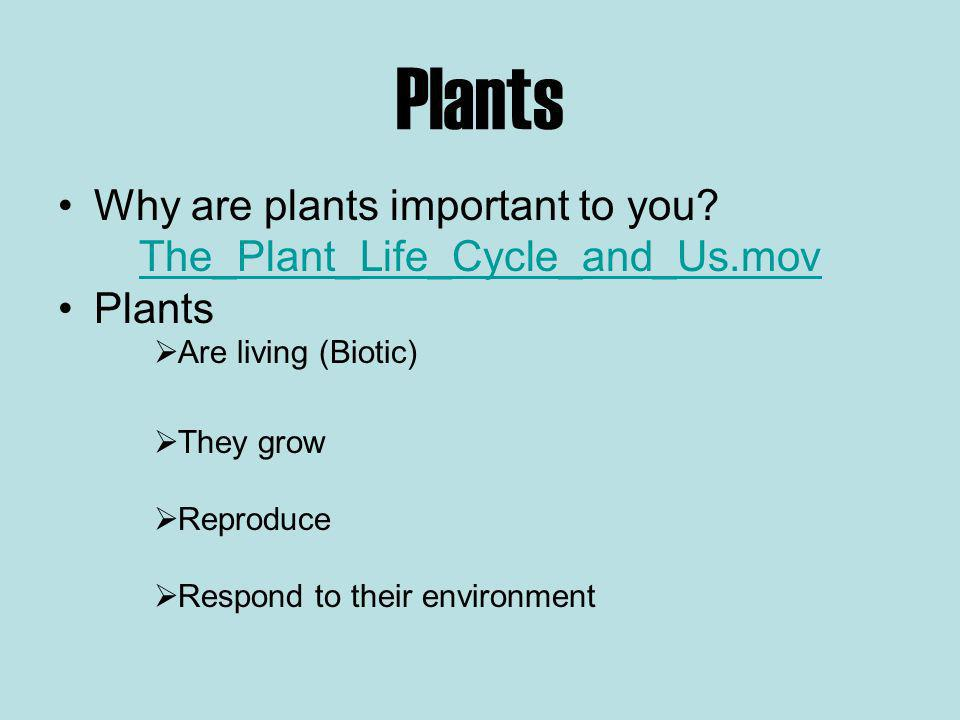 Plants Why are plants important to you