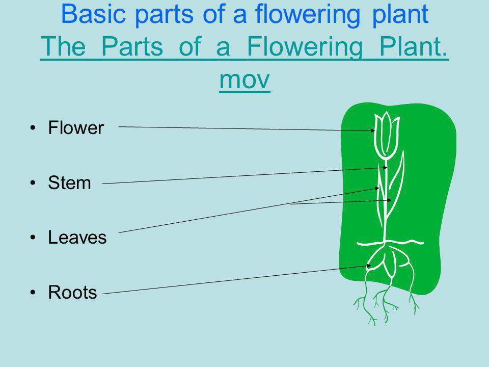 Basic parts of a flowering plant The_Parts_of_a_Flowering_Plant.mov