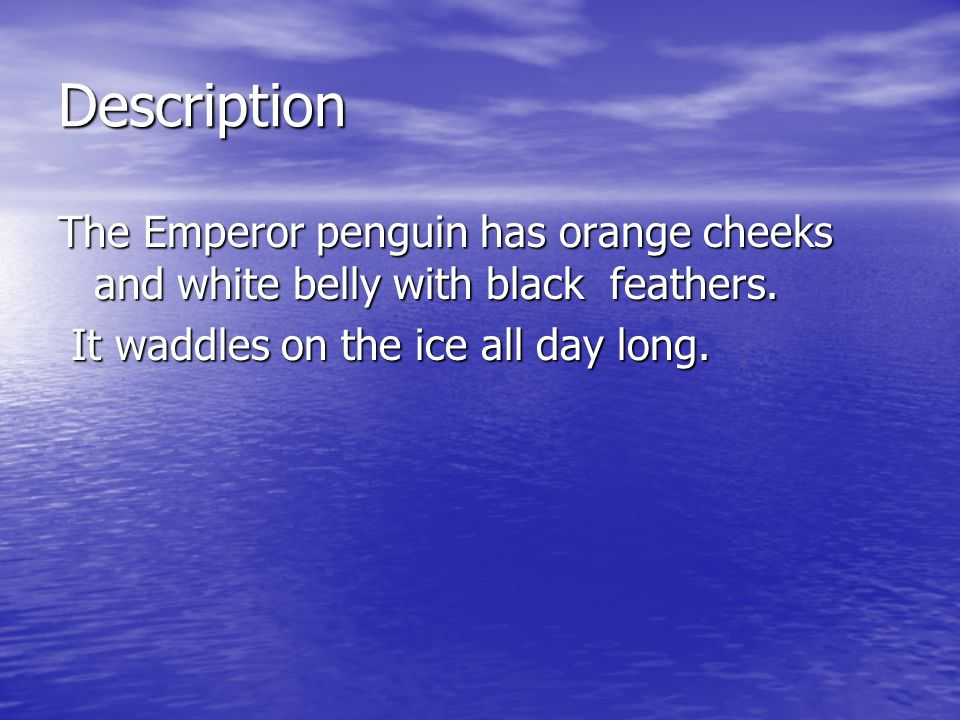 Description The Emperor penguin has orange cheeks and white belly with black feathers.