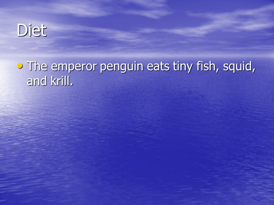 Diet The emperor penguin eats tiny fish, squid, and krill.